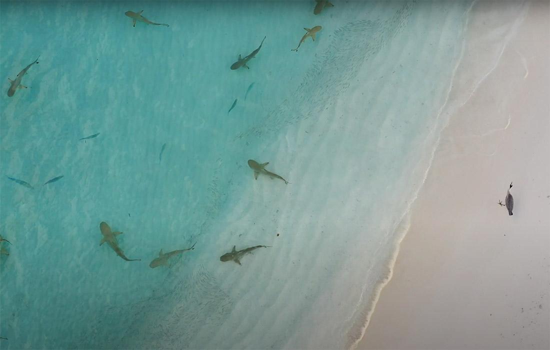 World Environment Day 2021 at Veligandu Island Maldives